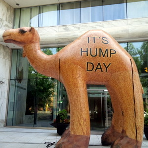 Metro Workers -- and a Big Camel -- to Protest at WMATA This Morning